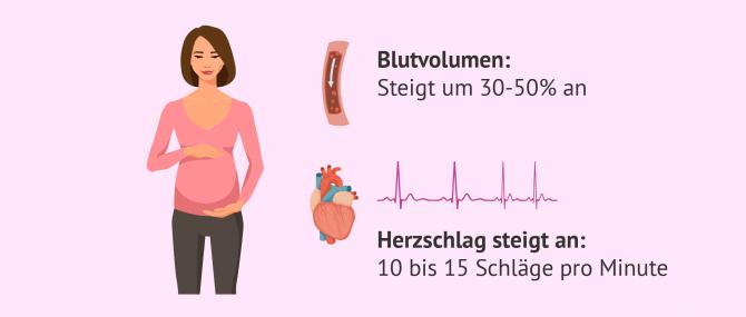 Imagen: Veränderungen im Herz- Kreislauf-System während der Schwangerschaft