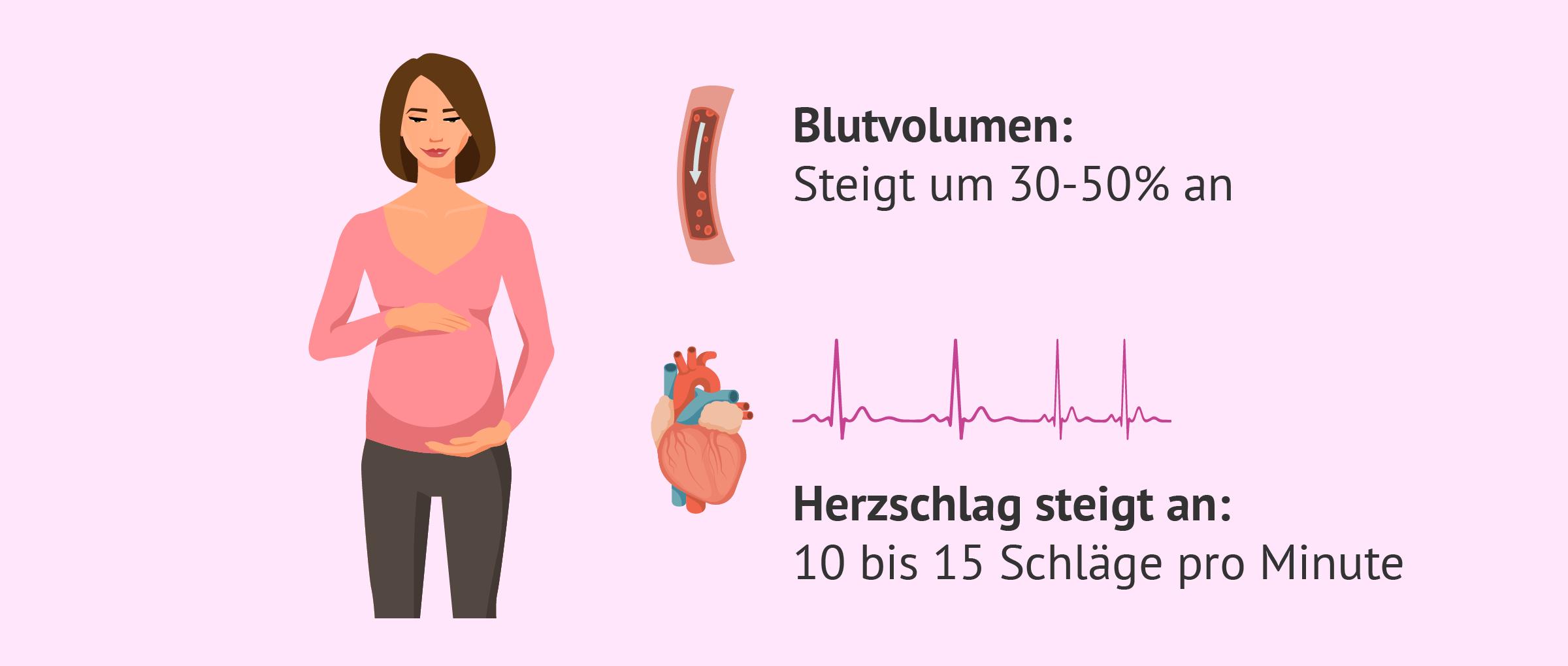 Veränderungen im Herz- Kreislauf-System während der Schwangerschaft