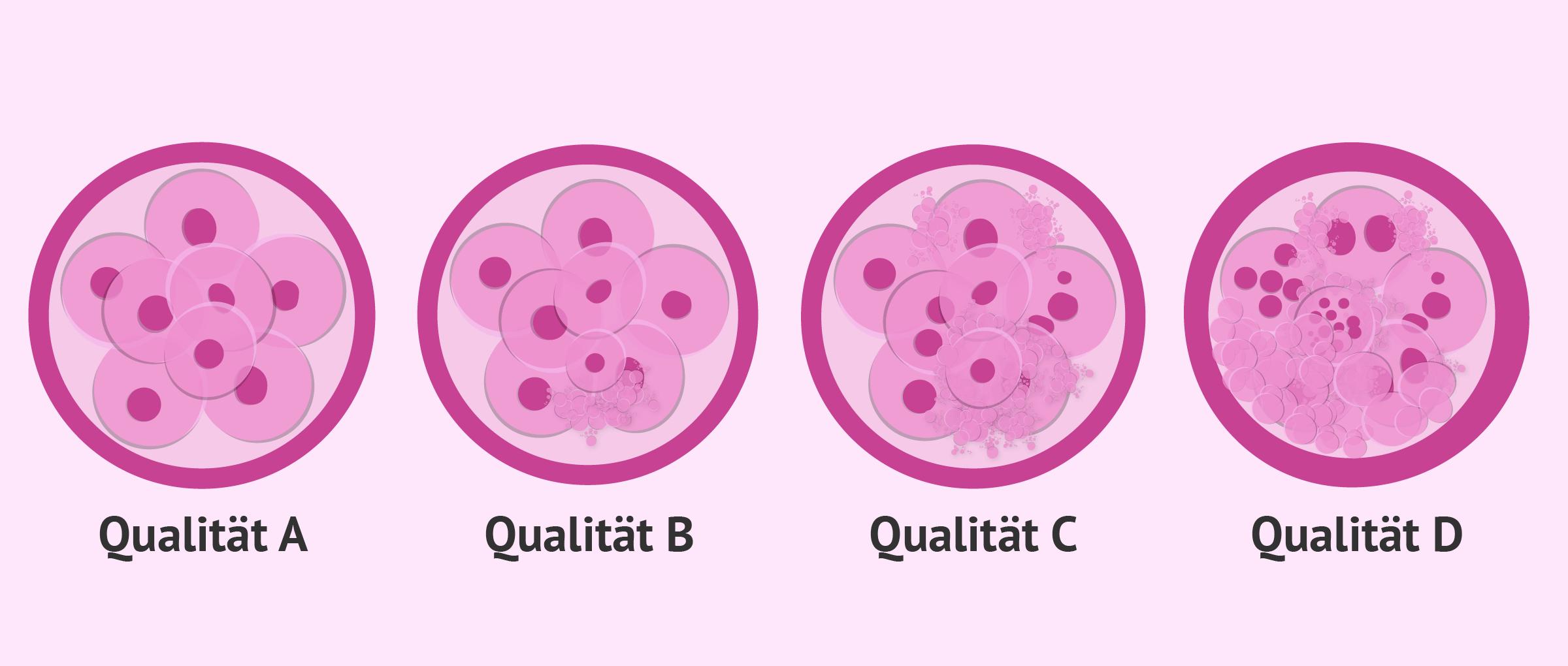 Vergleich der Embryoqualität