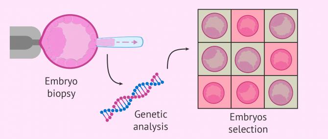 Imagen: PGD to blastocyst