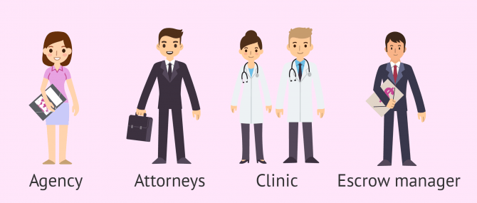 Professionals Involved in Surrogacy – Agencies, Attorneys & Clinics