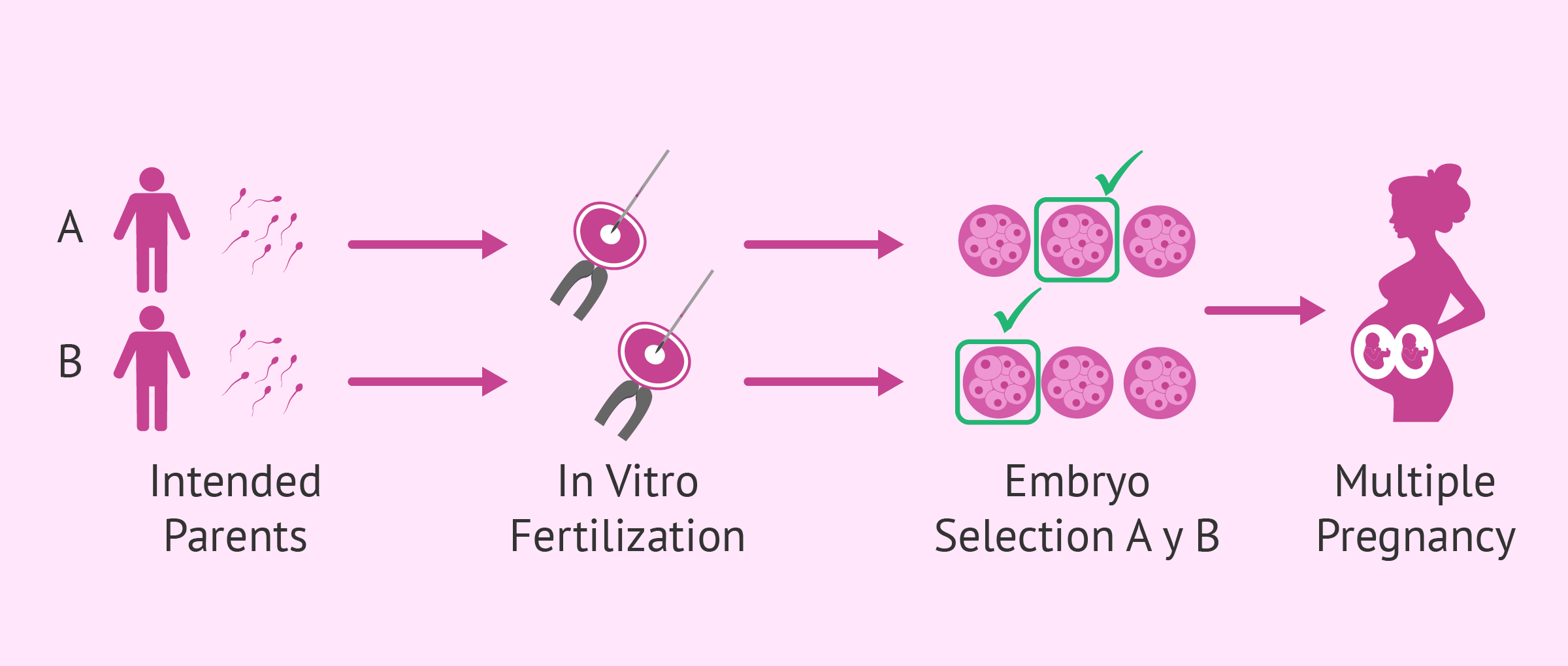 Transfer of one embryo from each father