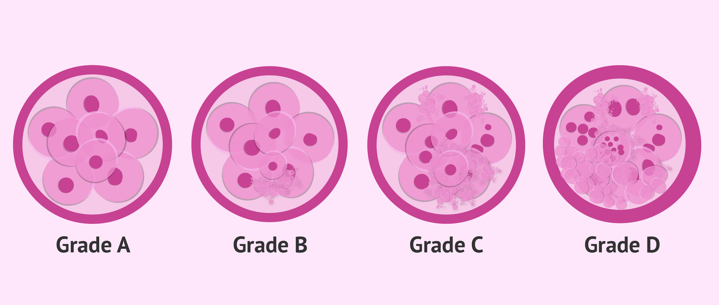 Classification criteria and categories according to the embryo quality