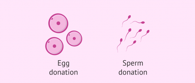 Imagen: Gamete donation: Egg and Sperm