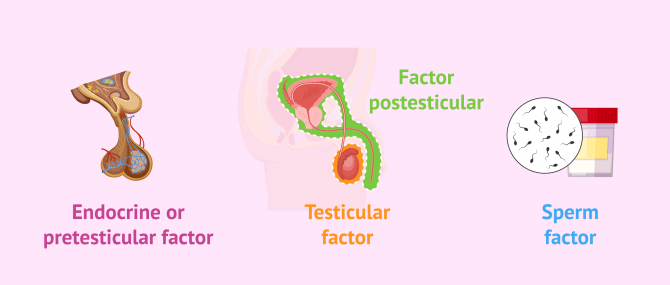 Imagen: Factors that provoce sterility in men