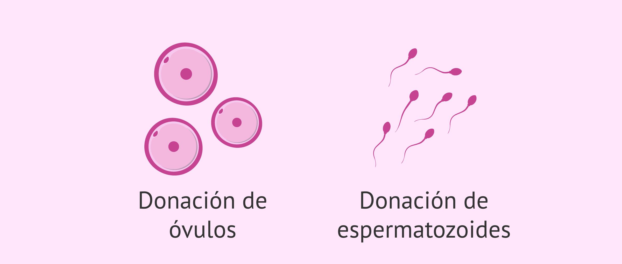 Donación de gametos