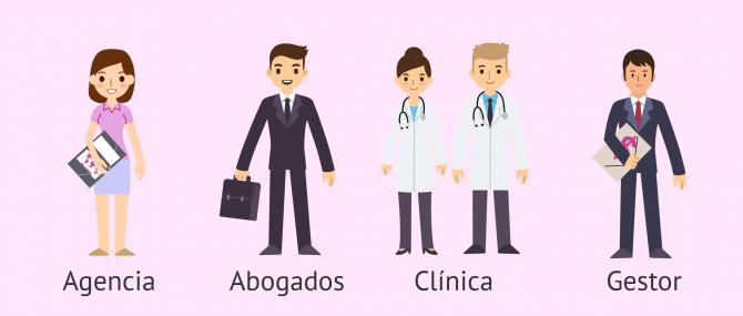 Profesionales en gestación subrogada: agencias, clínicas y abogados
