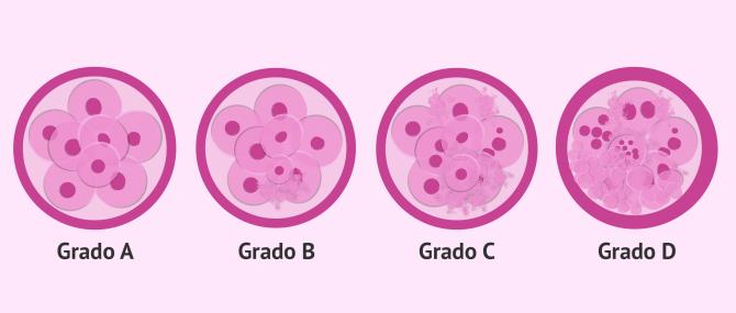 Criterios de clasificación y categorías según la calidad embrionaria