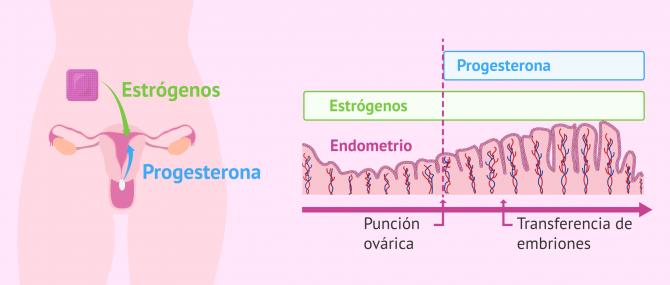 Imagen: Preparación endometrial para la transferencia embrionaria