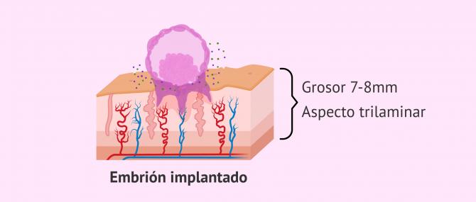 Imagen: Características para la implantación embrionaria