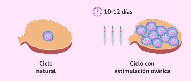 Imagen: Ciclo natural vs ciclo estimulado