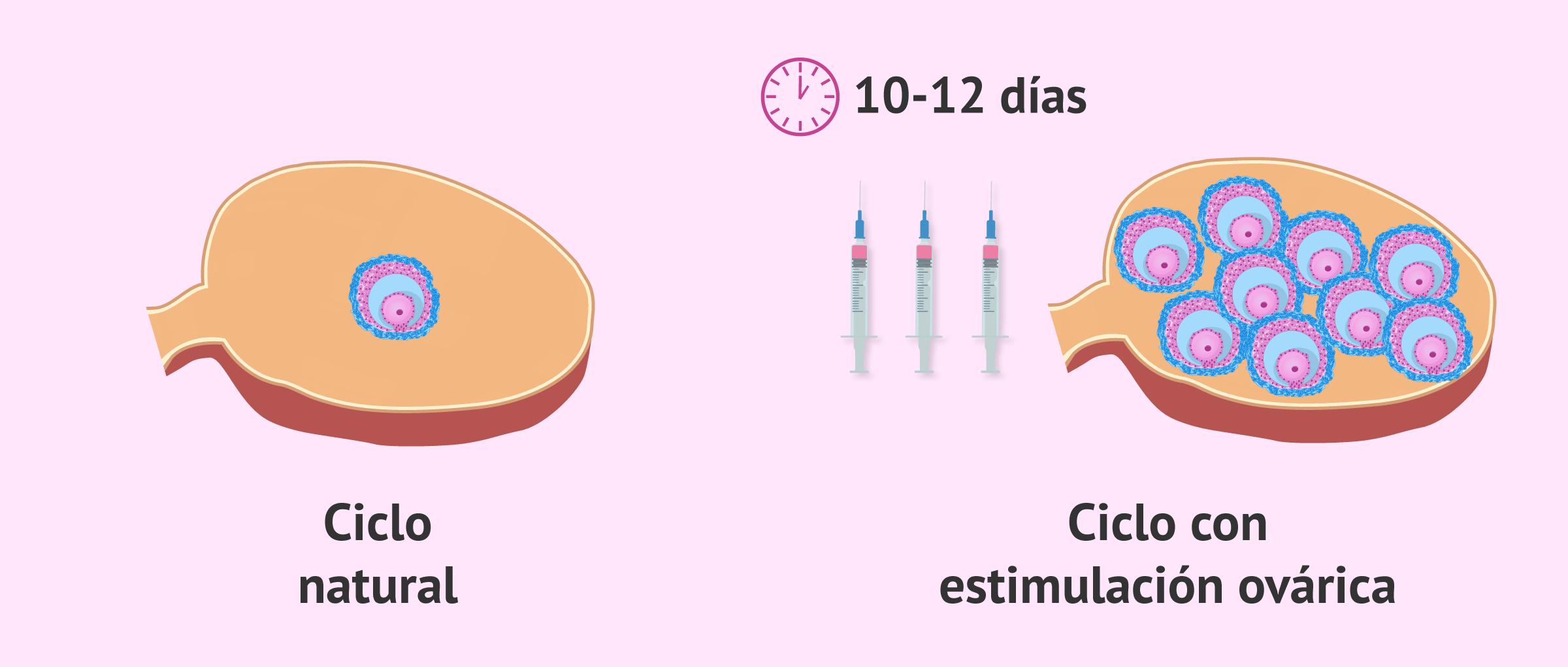 Ciclo natural vs ciclo estimulado