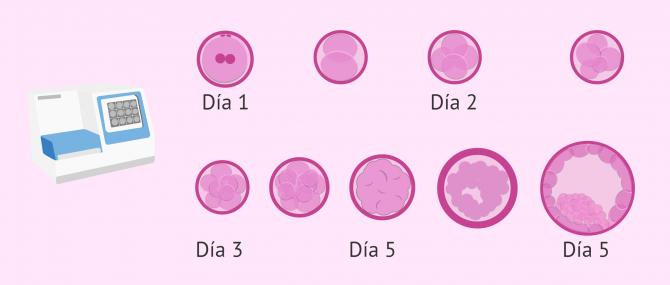 Imagen: Selección de embriones por Time-Lapse