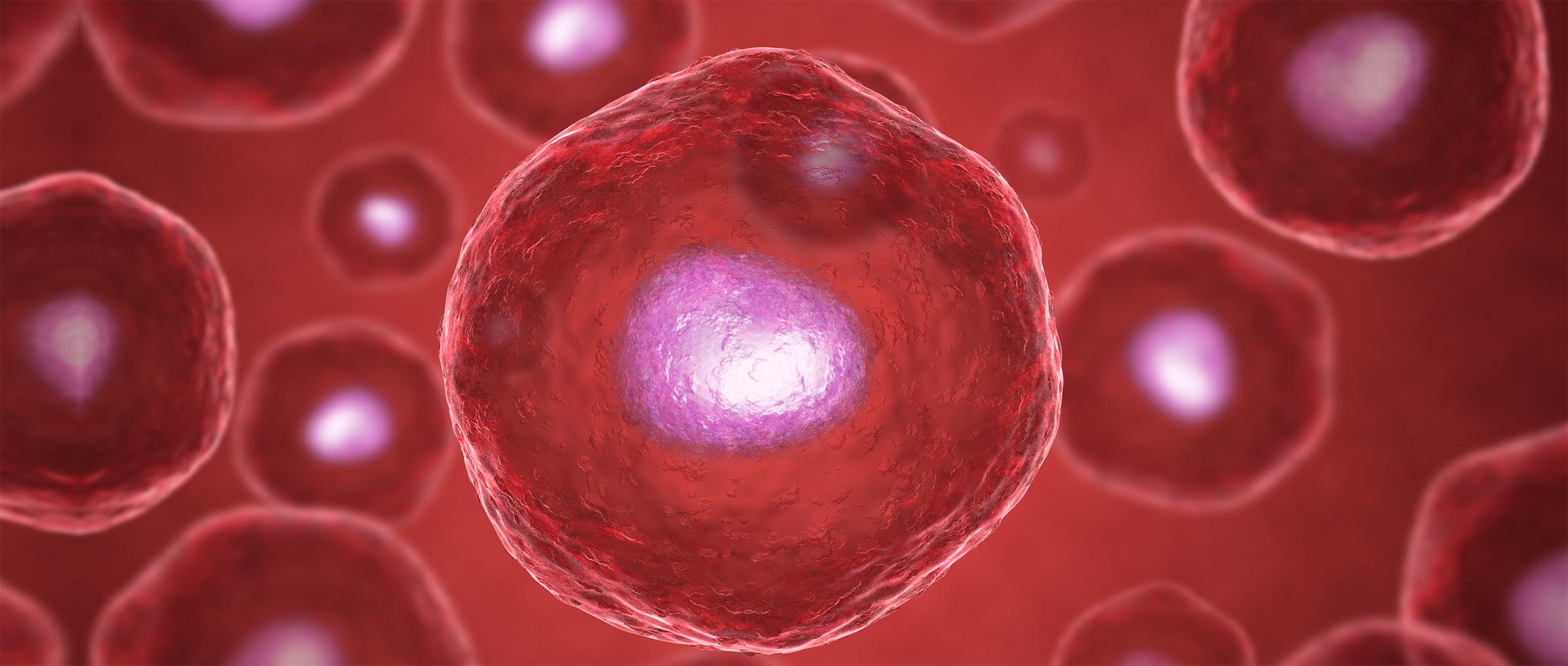 Vitrifier les embryons surnuméraires