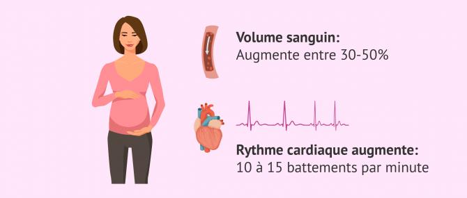 Imagen: changements cardio vasculaires et grossesse