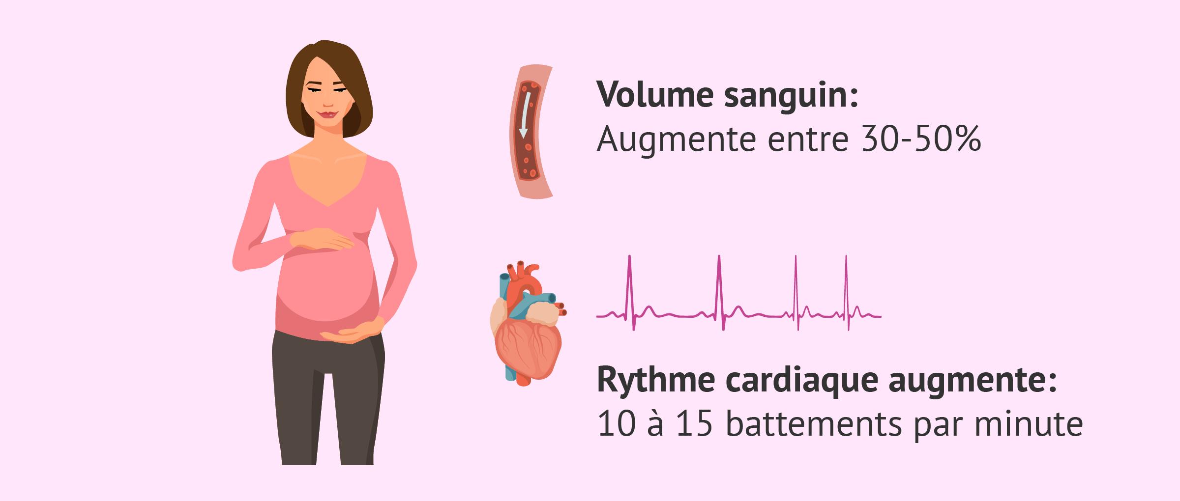 Changements cardiovasculaires pendant la grossesse