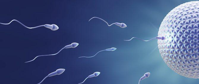 Comment fonctionne le don d'ovules et de spermatozoïdes dans la PMA?